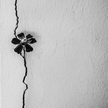 E profonde come un giorno di miseria (Paul Nougé)